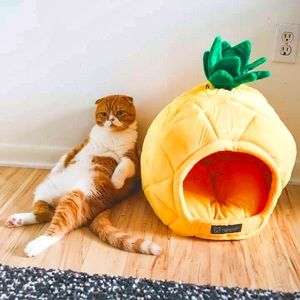 Pineapple Pet Bed Leaves Slight Sewing Imperfect